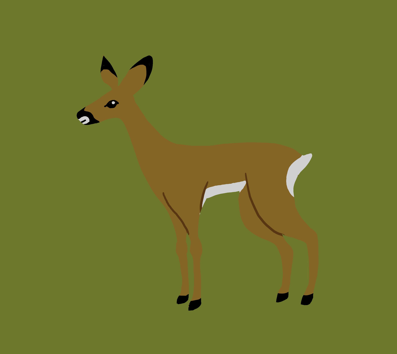 Illustration chevreuil