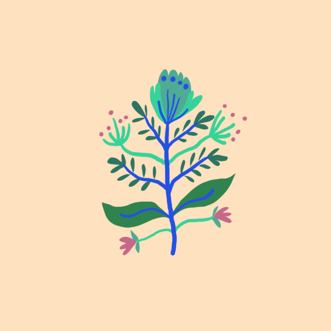 Illustration Plantes